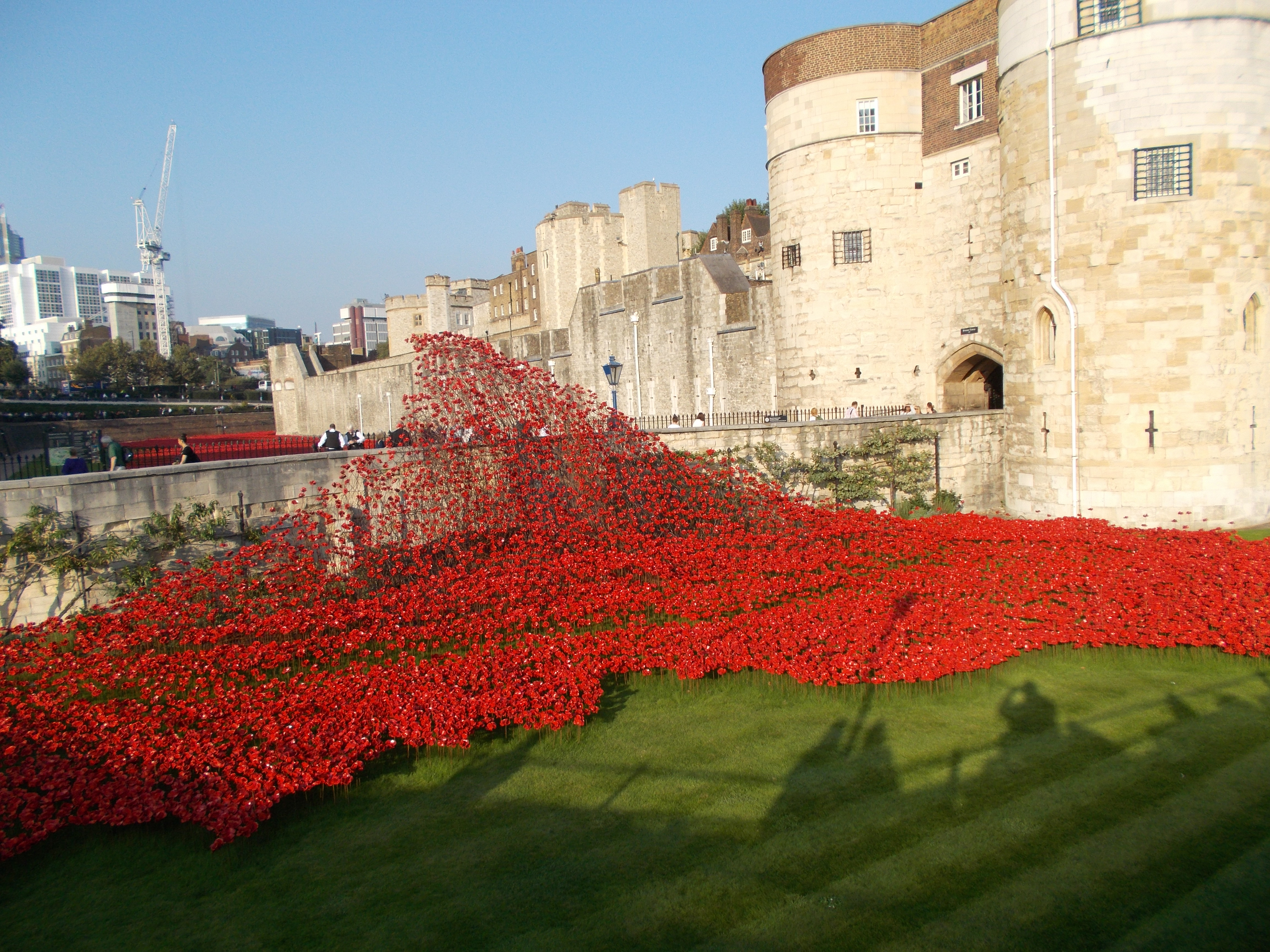 The Roses At The Tower Of London The Black Crane - Tower of london river of poppies